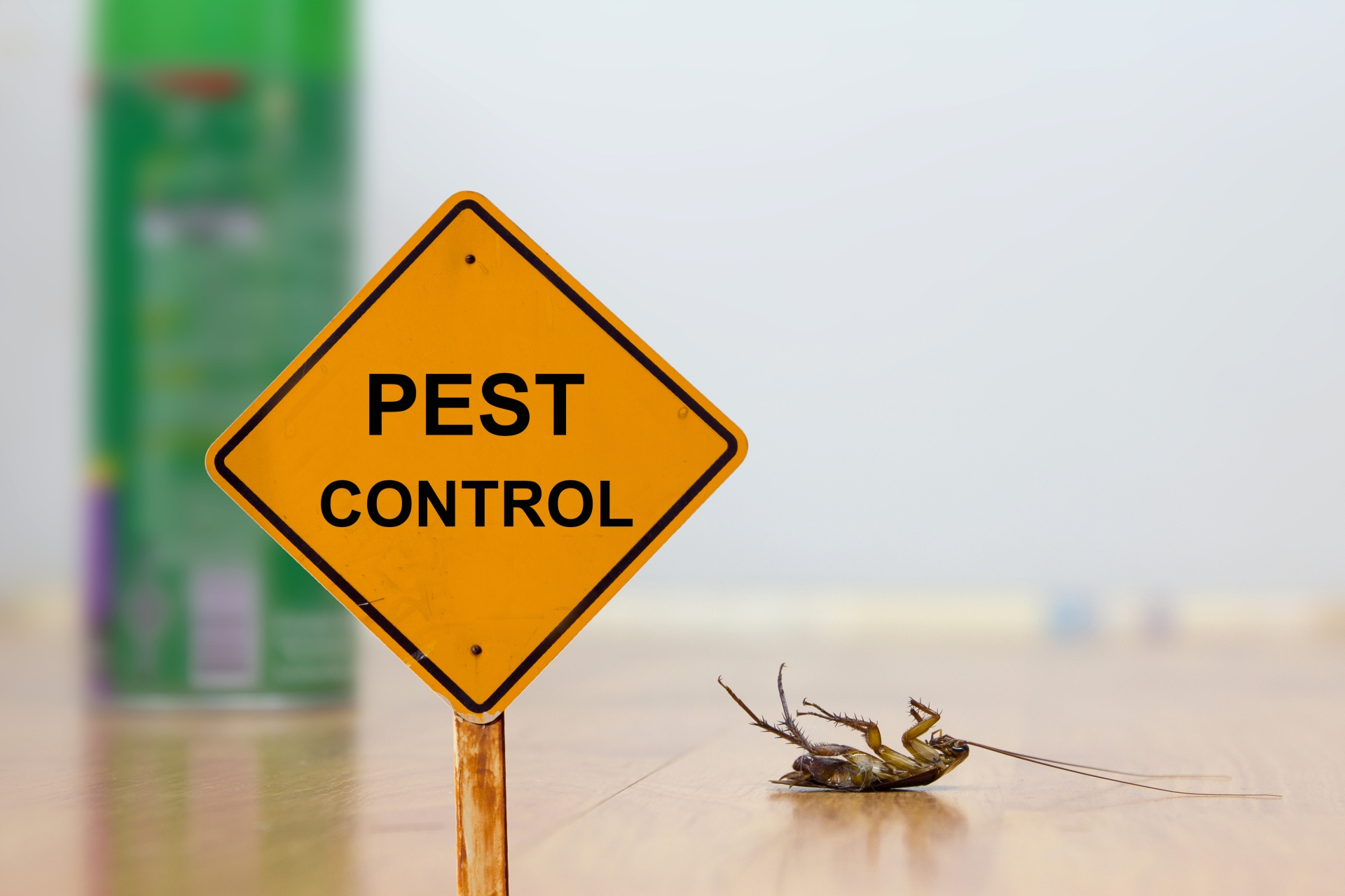 24 Hour Pest Control, Pest Control in Belmont, South Sutton, SM2. Call Now 020 8166 9746