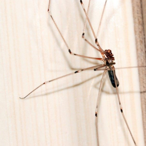 Spiders, Pest Control in Belmont, South Sutton, SM2. Call Now! 020 8166 9746
